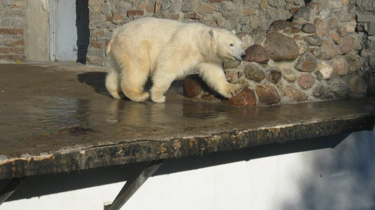 Нелегалы пытались проехать в Британию на грузовике с белым медведем