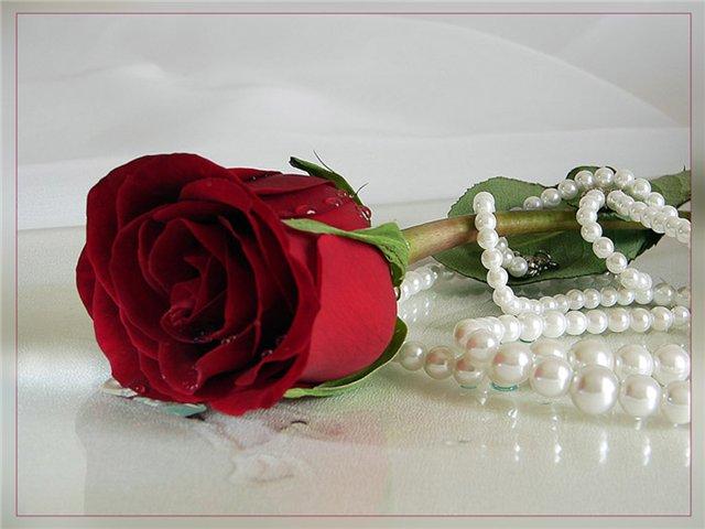 роза и жемчуг
